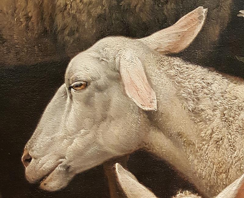 stier-schapekop