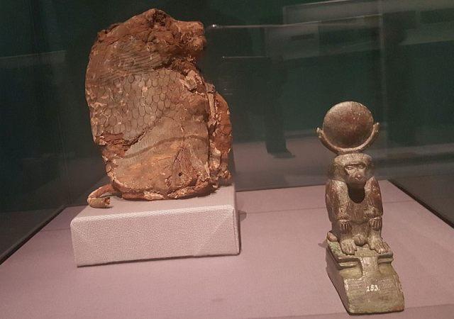 baviaan-mummie